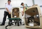 Авиаперевозка домашних питомцев